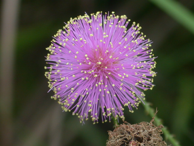 flower12-1