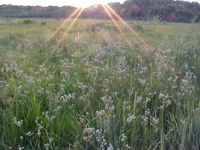 prairie4