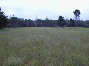 Chickasawprairie2