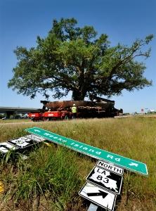 pb-110517-tree-shulman.photoblog900