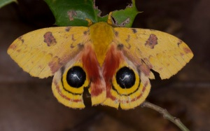 7746+io+moth02
