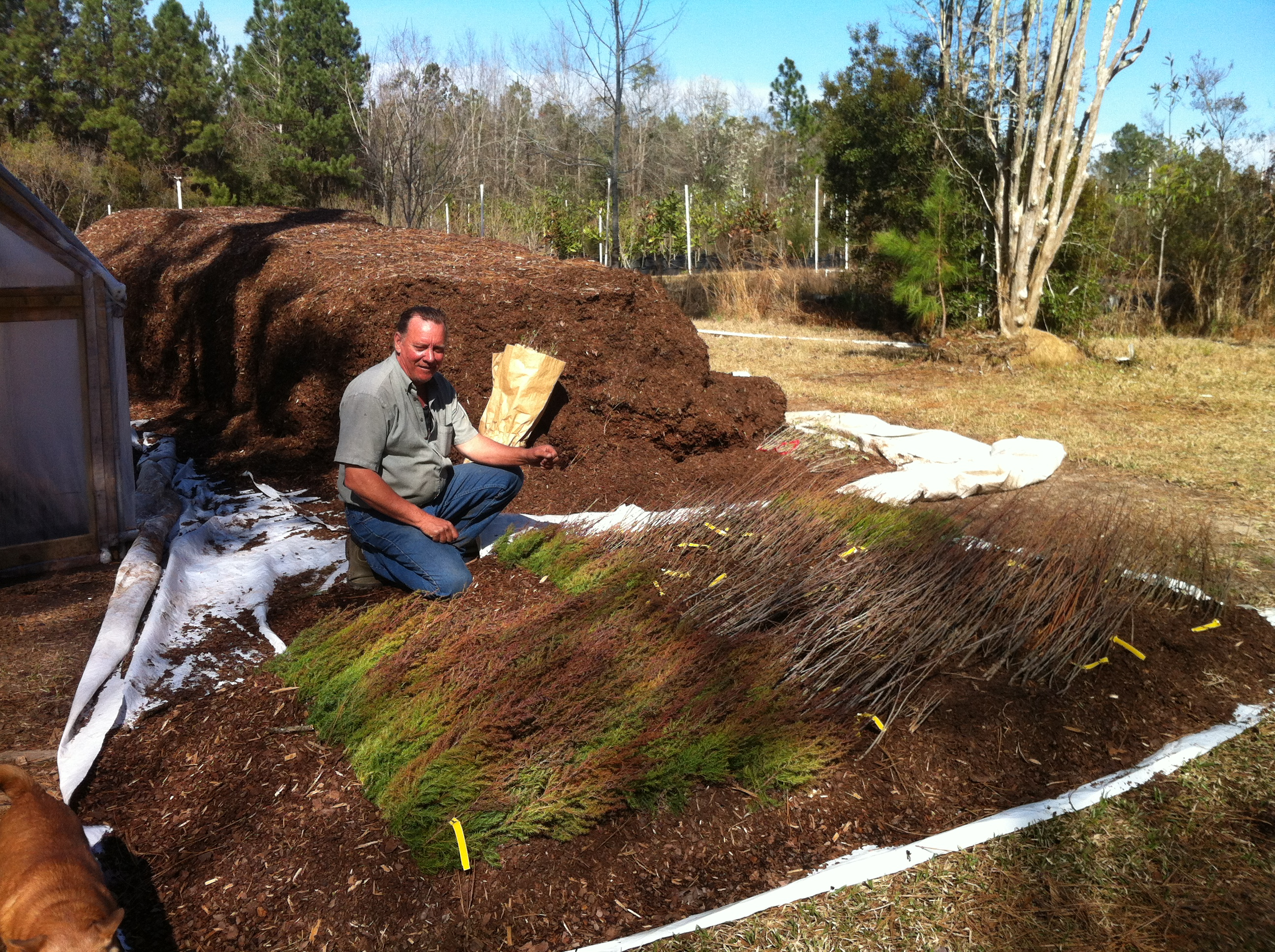 ecological landscapes Louisiana | Meadowmaker. Seed Man. Artist.