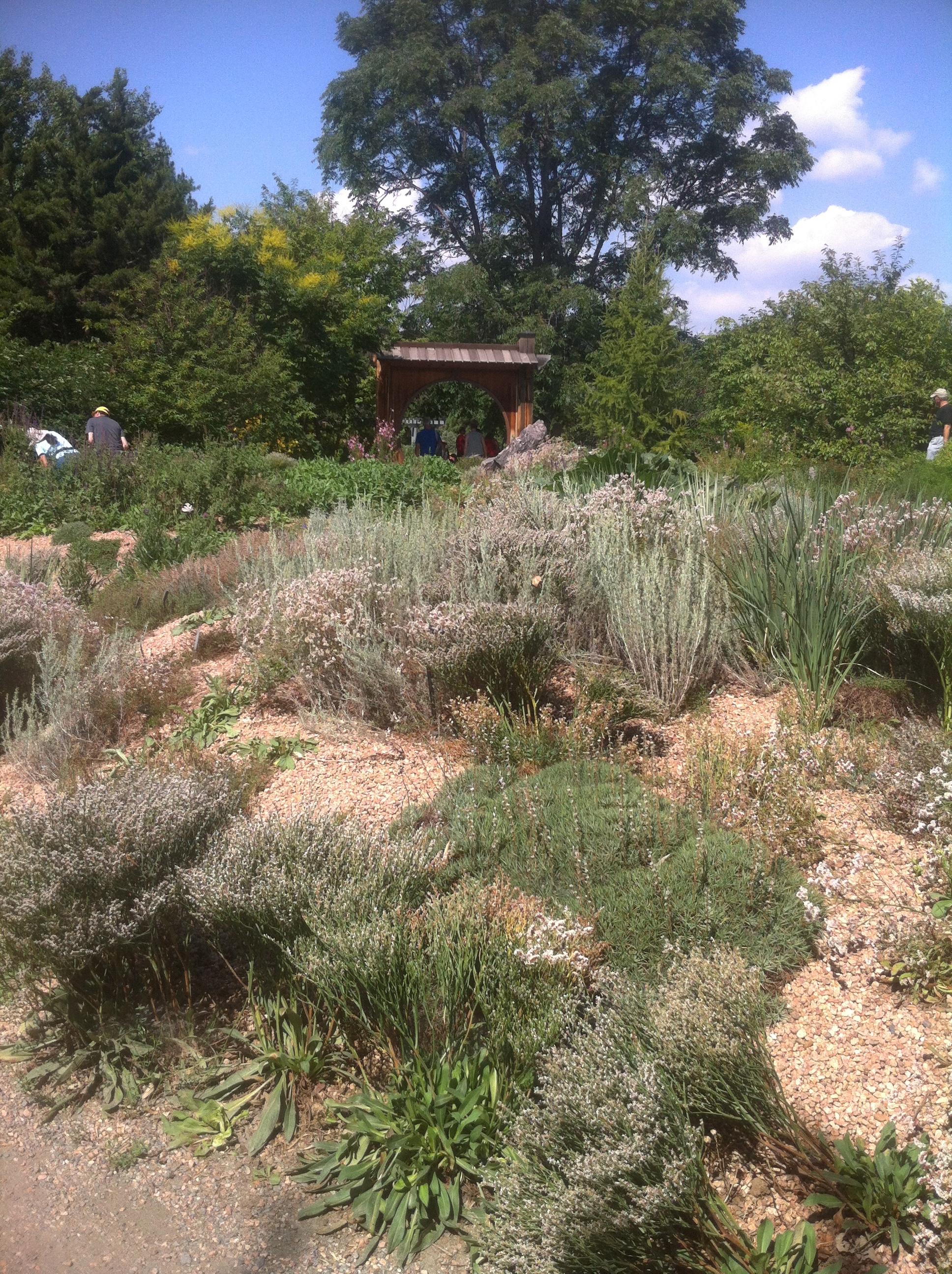 Long Leaf Pine Understory Meadows Seed Art