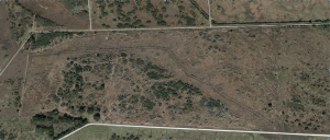 Hackberry prairie