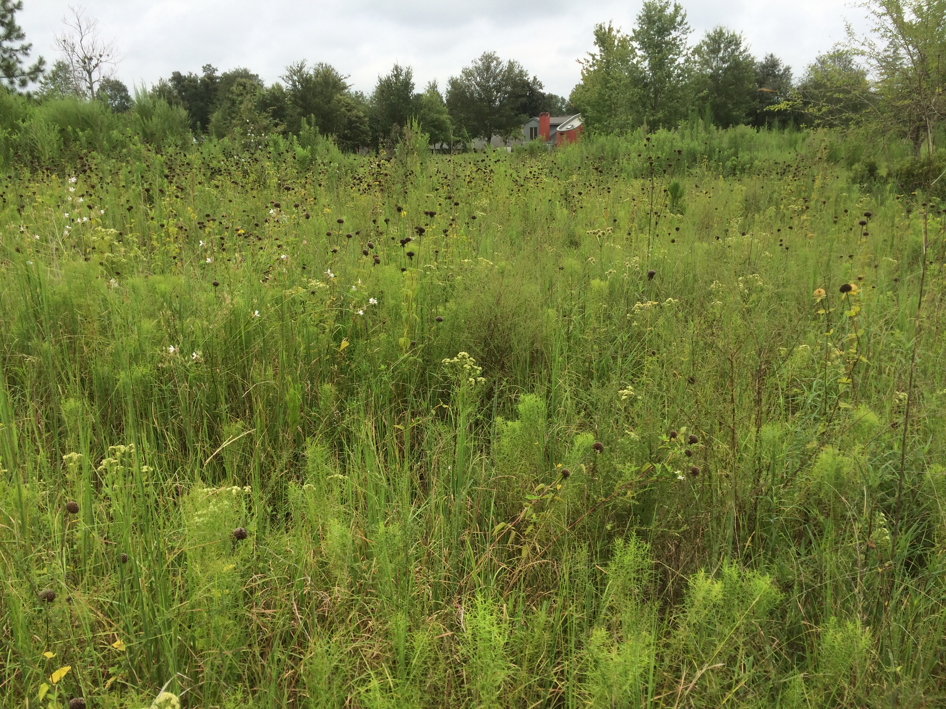 Image Result For How To Start A Prairie Garden