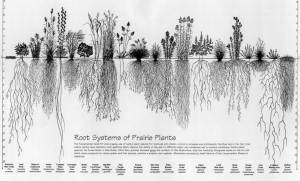 roots-of-native-plants